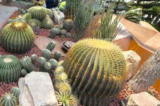 """食人植物、箭毒木……世园会植物馆里的""""奇花异草""""来了解下"""