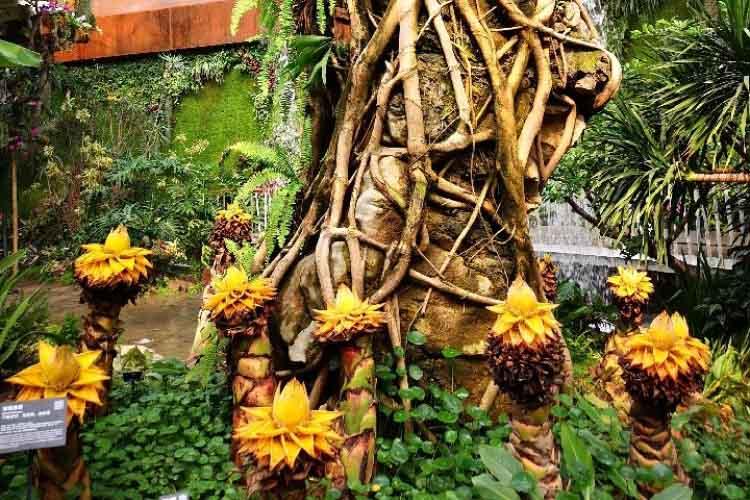 世园会植物馆探秘!一起来看植物不可思议的智慧