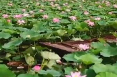 共和国发展成就巡礼•山东篇丨微山湖:大力治污  再现往日河湖风光