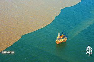 大美新山东丨黄河入海的样子你见过吗?黄蓝交汇,泾渭分明,美的不敢直视!