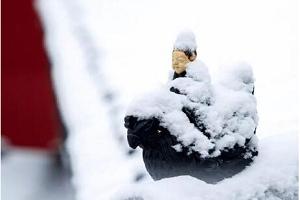 夜读丨雪,冷面清明,纯净优美,像极了我们的心
