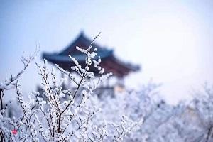 非冰非雪,非雾非花,山东这种自然奇观惊艳你的朋友圈!