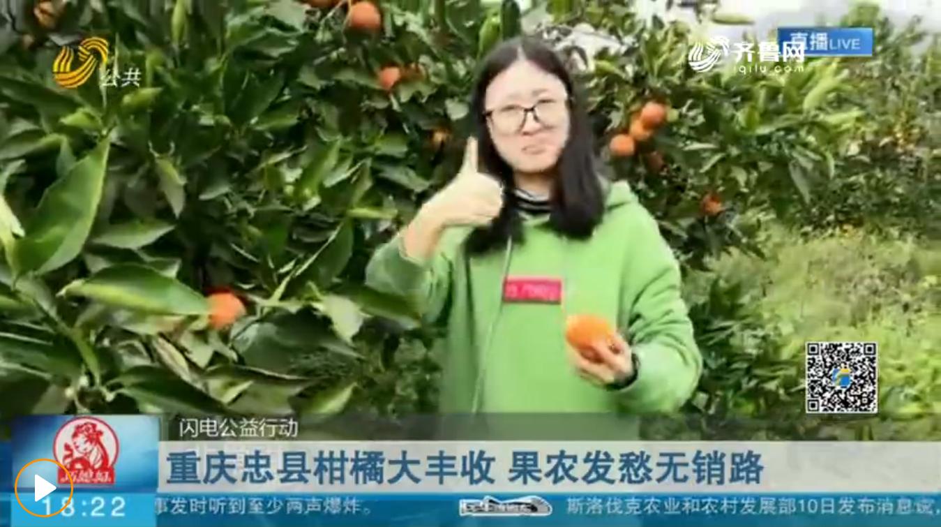 重庆忠县柑橘大丰收 果农发愁无销路