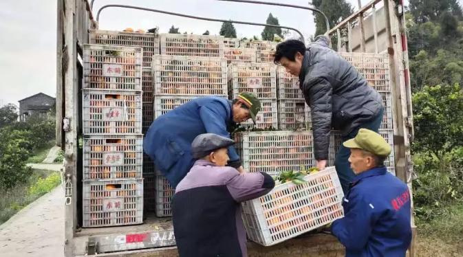 25吨重庆忠橙15日济南开售,还能网上下单哦~