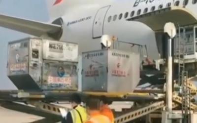 央视《新闻联播》:民航第四批包机运输医疗队支援武汉 由山航等9家航空公司执行