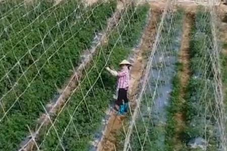 央视《新闻联播》|山东阳谷新凤祥集团加紧生产 全力保障市场供应