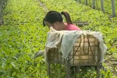 央视《新闻联播》|山东莒县岳家村蔬菜长势喜人