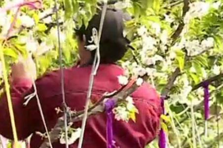 央视《新闻联播》:疫情防控不放松 山东蓬莱果农授粉忙不停