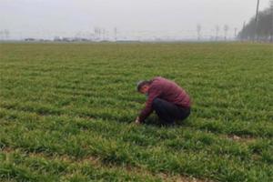 寒亭区高里街道:防疫不忘备春耕,2200亩小麦已完成施肥