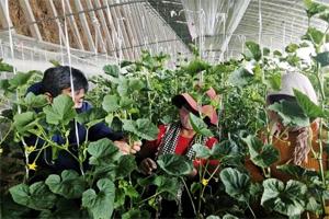 """线上下单、入户指导 潍坊昌乐春季农业生产有序""""开篇"""""""