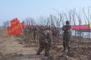 潍坊寒亭区开展义务植树造林活动 已完成造林600余亩