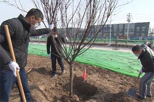 """让绿色成为城市""""最美底色""""!潍坊高新区组织开展义务植树活动"""
