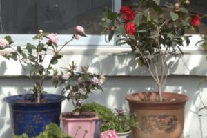 日照岚山区开展线上美丽庭院创评工作 引领幸福农村生活