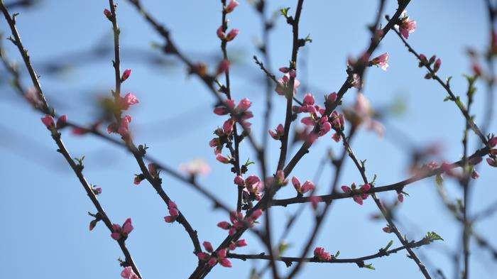 校园花开春意浓!德州学院绿意满园