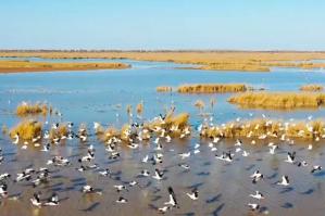 【海洋修复看山东】600万只、384种鸟类齐聚在此……东营黄河三角洲打造多样化鸟类栖息地