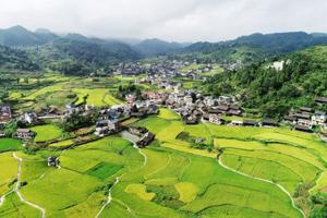 """全国人大代表王银香:把产业和人才打造成村里""""两大引擎"""""""