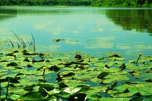 全国人大代表于安玲:深入调研,促成池塘退养问题解决
