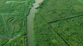 湿地之美丨鸟鸣水澈,荷苇相伴,领略山东湿地生态之美