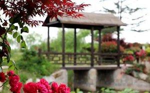 """这就是山东丨脏乱差变身""""后花园""""!青岛即墨柳林村打造快乐生活"""