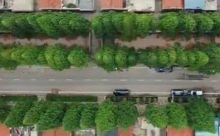 【每日新闻】青岛:鳌角石村千棵水杉树 村民守护40年