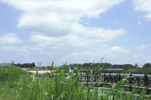 蹲点乡村看振兴 | 枣庄周营镇:一条河带来的幸福生活