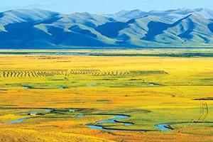 山东扬起黄河流域生态保护和高质量发展龙头