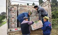 果农带货Vlog:清洗不打蜡不着色 25吨忠橙14日到济南