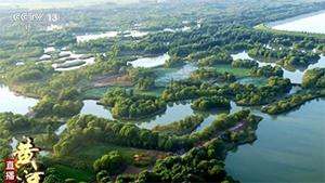 """荒野变身动植物天堂 来济南看""""山东最美湿地"""""""