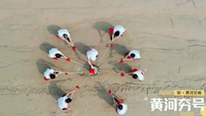 黄河夯号、东方白鹳鸣……一起听黄河交响乐