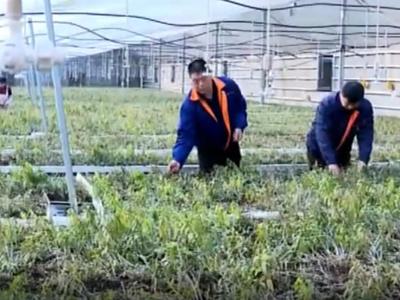 潍坊市潍城区创新扶贫资金使用方式 助力脱贫攻坚