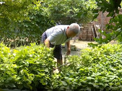 """寿光:""""扶贫小菜园""""美了农家院 丰富了群众菜篮子"""