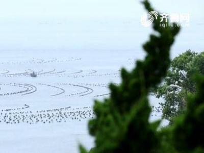 长岛修复海洋生态投入20亿 藻类增加30多种