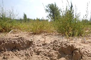 大迁建丨以水而定、量水而行! 黄河连续21年没有断流,解决山东三分之一用水