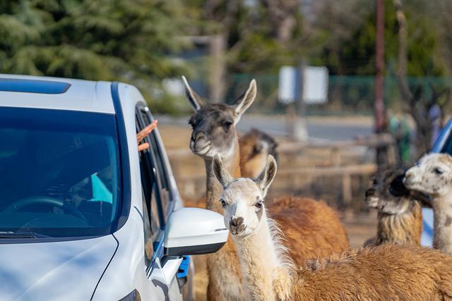 旅荐|探秘寒冷的北方动物世界中的一股暖流南非暖冬狂欢节