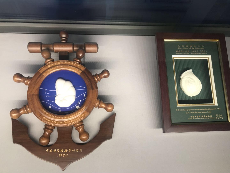 《海洋之心——有孔虫科普展》在山东博物馆开展