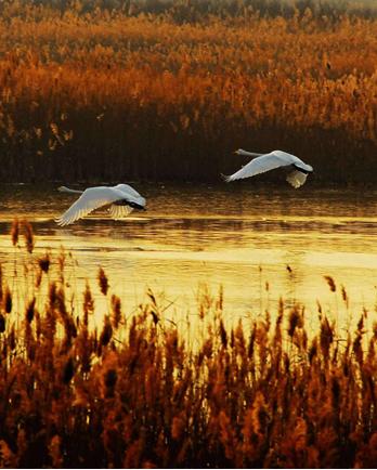 3月8日起,黃河口生態旅游區恢復開放