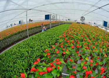 潍坊市花卉产业获省财政对地方优势特色农产品保险以奖代补资格