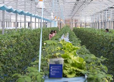 """潍坊市""""五大工程"""" 提升农业产业扶贫质量"""