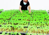 潍坊市构建标准体系开辟农业新路
