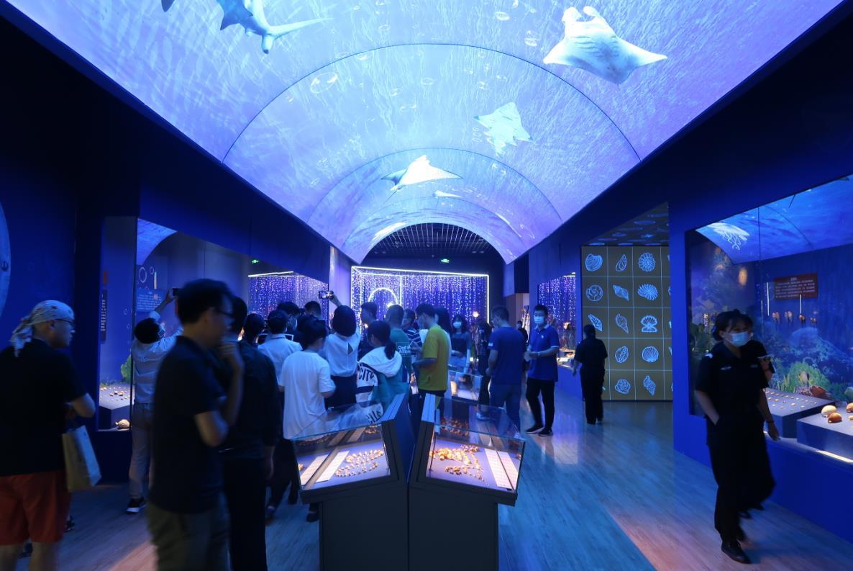 """""""三千玲珑——中国海洋贝类展""""今日在山东博物馆开幕"""