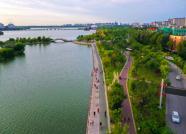 大河奔腾丨聊城城融湿地中,满眼皆是绿