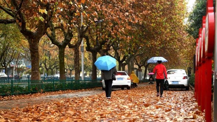 一场冬雨,落叶满城,醉美是济宁!
