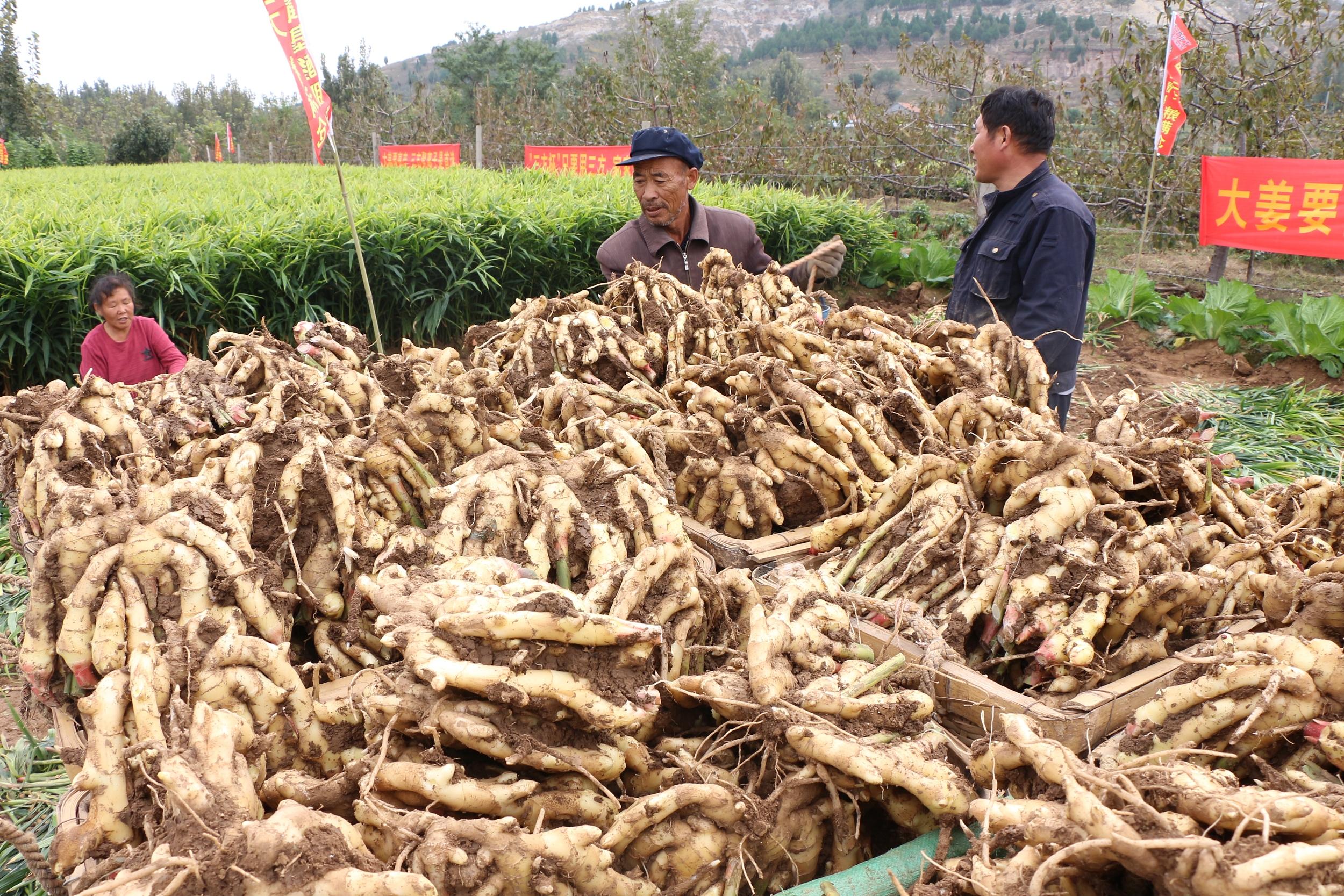 安丘优质农产品基地品牌价值超百亿元