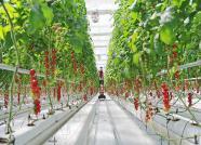 """寿光蔬菜产业的""""强者恒强""""之路"""