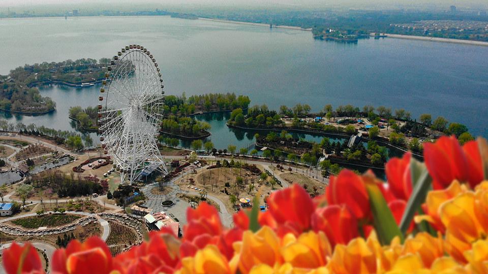 犇向春天|泰山花海郁金香 花间湖水琥珀光