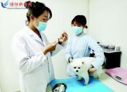 """办""""犬证""""无门路 打疫苗靠自觉 潍坊市民期盼出台地方性法规"""