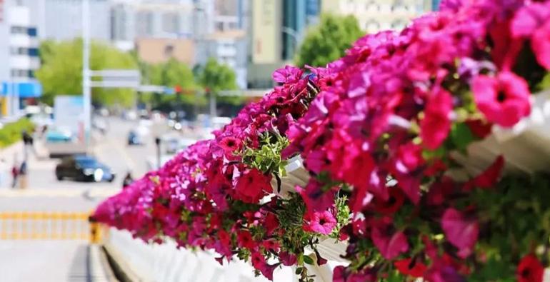 花满潍城,美丽共享