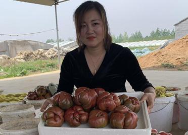 """临朐""""贵族西红柿""""打入上海市场"""