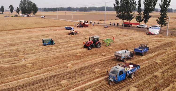 聊城617萬畝小麥開鐮!收割播種同時進行,5畝地用了不到倆小時