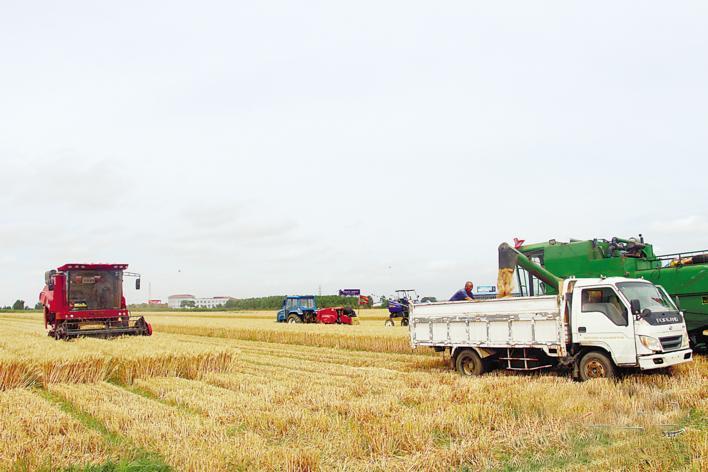 烟台市180万亩小麦开镰收获